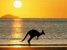 Kangaroos <3 / Australia