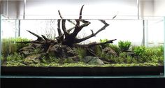 ADA 120-P Layout using Manten Stone and TX-Select Driftwood by ADG