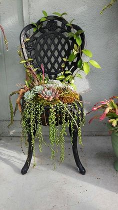 Chair top flower, chair decor, garden chair decoration, garden chair ideas, interesting garden chairs – Miya Pak - All For Herbs And Plants Succulents In Containers, Cacti And Succulents, Planting Succulents, Planting Flowers, Succulent Gardening, Garden Planters, Container Gardening, Organic Gardening, Succulent Planters
