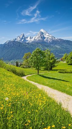 Idyllic summer landscape in the Alps with fresh green mountain pastures and snow-capped mountain tops in the background, Nationalpark Berchtesgadener Land, Bavaria, Germany. Beautiful World, Beautiful Places, Beautiful Pictures, Beautiful Flowers, Foto Nature, Landscape Photography, Nature Photography, Jolie Photo, Stock Foto