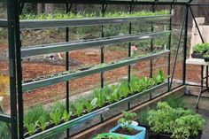 Growing Vegetables in gutters