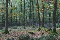 New Forest - Thomas Hanks Photography