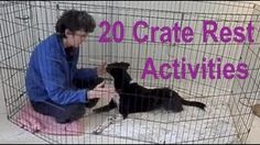 Crate Rest Activities for Dogs after Back, Hip, Leg Injuries, ACL or TPLO, Heartworm treatment. Also just plain great ideas for quiet indoor training! Brain Games For Dogs, Dog Games, Agility Training For Dogs, Dog Agility, Training Tips, Disabled Dog, Warrior Cats Books, Leg Injury, Pet Dogs