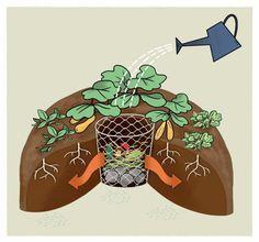 Odla i nyckelhålsbädd – ger bättre skörd på minimal yta Growing Gardens, Hobby Room, Dark Wood, Backyard, Nature, Jorden, Composting, Outdoor, Landscaping