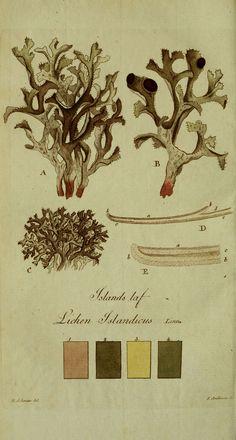 Svenska lafvarnas färghistoria Stockholm :Tryckt hos C. Delén,1805-[1809] biodiversitylibrary.org/page/13683523