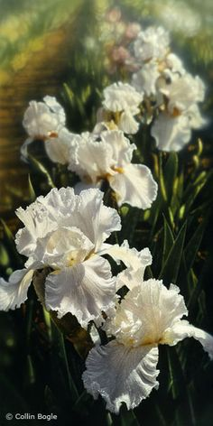 Beautiful Floral Art of Collin Bogle - AmO Images - AmO Images