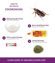 Natural Pesticides We Use Borax For Everything Actual Roach Balls - How to get rid of cockroaches in kitchen cabinets