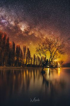 Wanaka, New Zealand. The famous Wanaka Tree under the stars. After shooting a couple of panoramas with the tree as the main focus, it was time to go have a closer look at this wonderful piece of nature. photo by: Beautiful World, Beautiful Places, Beautiful Pictures, Ciel Nocturne, Lake Wanaka, Lone Tree, Photos Voyages, Out Of This World, Milky Way
