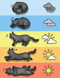 Posizione del dormire del gatto secondo il tempo atmosferico