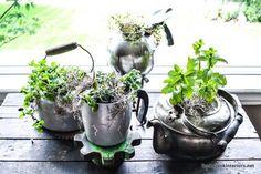Old Kettle Herb Garden.love these Funky Junk Interiors: SNS 176 - JUNK garden planters Diy Herb Garden, Garden Junk, Garden Planters, Garden Art, Garden Beds, Home And Garden, Upcycled Garden, Big Garden, Terrace Garden
