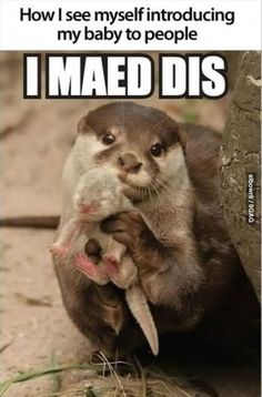 Otter baby. Laughed way too hard at this.