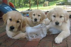The Puppy Cam pups know how to cool off on a hot day.