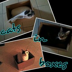 Cats in boxes man.