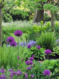 allium, ferns, euphorbia, hosta...