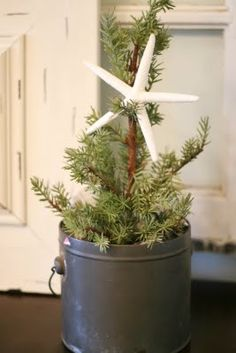 Yup.  That's our usual christmas tree - tabletop, manageable to light and decorate, great smell, and then dig a hold in your yard and ADD to the environment.  Easier on the conscience.
