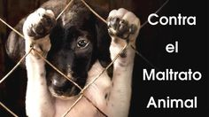 Action protocol of a veterinarian if they have evidence of animal abuse