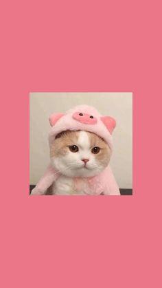 Iphone Wallpaper Cat, Cute Anime Wallpaper, Dog Wallpaper, Animal Wallpaper, Cartoon Wallpaper, Cute Cat Names, Funny Cute Cats, Cute Cat Gif, Aesthetic Pastel Wallpaper