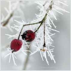 ♂ Nature as art frozen red by *Ingelore