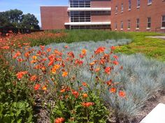The Ohio State University Green Roof at Howlett Hall on May 23, 2015; Photo Courtesy of Higher Ground Green Roofs