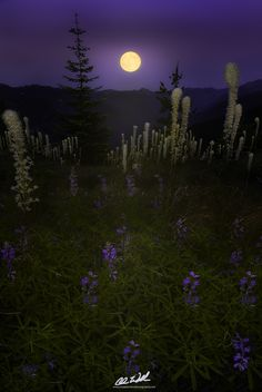 Dancing in the Moonlight by Chris Williams Exploration Photography on 500px