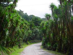 Selva Negra, Matagalpa Nicaragua