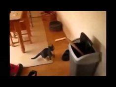 Gatos Chistes Videos De Risa Guerra De Chistes Videos Chistosos Videos Graciosos - YouTube