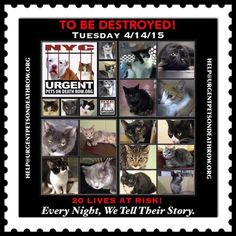 TO BE DESTROYED – 04/14/15 20 lives at risk.