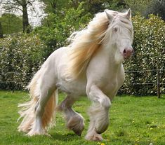 Colorful World of the Gypsy Horse - Reds - Gypsy Horse Today Most Beautiful Horses, Pretty Horses, Horse Love, Beautiful Roads, Beautiful Things, Beautiful Creatures, Animals Beautiful, Cute Animals, Gypsy Horse
