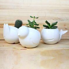 macetas cactus animales ceramica mudo objetos decoracion ballena ballenita conejo paloma