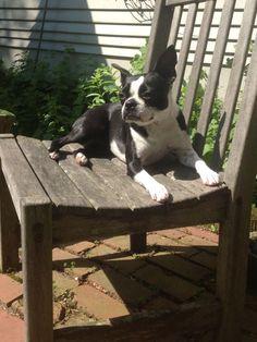 Maddie enjoying the sun