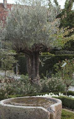 Ideal T uschend echt Die Doppelg nger mediterraner Pflanzen Best Garden landscaping Garten and Gardens ideas