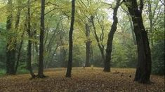 Discover London's nature reserves and woodlands, from Epping Forest to the London Wetland Centre London Wetland Centre, Epping Forest, London With Kids, Hampstead Heath, London Garden, Memorial Park, National Portrait Gallery, Closer To Nature, London Photography
