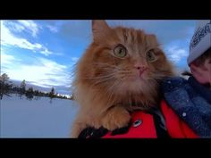Jesperpus the Cross-Country Skiing Cat Loves the Snow   Nerdist