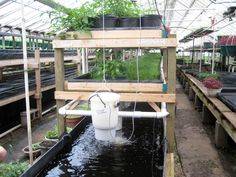 Aquaponics is a closed, recirculating agro-ecosystem that integrates aquaculture and the cultivation of soil less plants (hydroponics) in an aquaponics system fish generate nutrients that are used. Aquaponics System, Backyard Aquaponics, Aquaponics Fish, Hydroponic Gardening, Sustainable Gardening, Sustainable Design, Sustainable Food, Fish Farming, Organic Gardening
