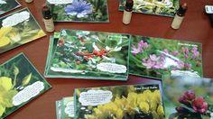 jogo Cards Recado da Flor - Florais de Bach