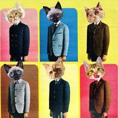 Tom Cat Fashion (Eugenia Loli)