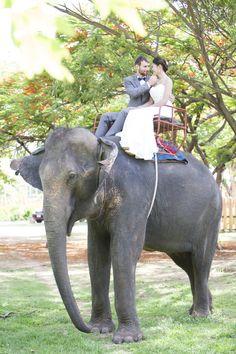 Unforgettable Elephant Wedding Transportation   Private Residence – Surin, Thailand   Jessi Marri Photography https://www.theknot.com/marketplace/jessi-marri-photography-houston-tx-551814