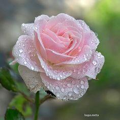"pinkblumen: "" {❀} / Bagus & Metta """