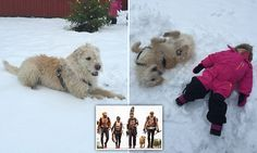 Hero stray dog Arthur celebrates his new life in the snow