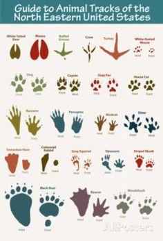 animal tracks printable - Google Search