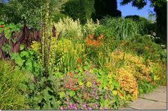 Right plant; right place is an expression used by garden designers. This article teaches you some of the essentials of planting design from acclaimed teacher Hilary Thomas