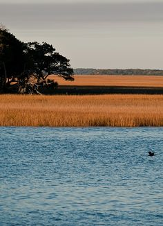 Cumberland Island, GA. One of my favorite places. This view is from the boardwalk which protects the land from so much trampling of feet. This view is facing southwest over the marsh side of the island; miles of untouched marshland.