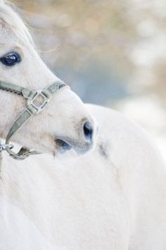 Awesome, one of the most beautiful creatures on earth. I love horses. All The Pretty Horses, Beautiful Horses, Animals Beautiful, Cute Animals, Le Zoo, Majestic Horse, Mundo Animal, Tier Fotos, White Horses