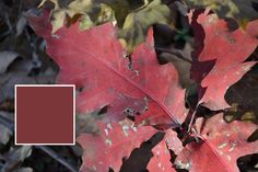 Natural Palettes: Finding beautiful fall colors on the Bruce Trail in Hamilton, Ontario | Nix Sensor Ltd.