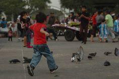 Molestemos palomas! Fotografía Cecilia Tórtola Guatemala