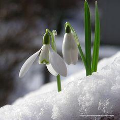 Winter Plants, Winter Garden, Celtic Calendar, Vita Sackville West, Celtic Festival, St Brigid, Growing Grass, Professional Landscaping, Seasons Of The Year