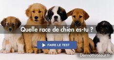 Et si tu avais été un chien dans une autre vie, quelle race de chien te correspondrait le mieux ? Fais ce test pour... Dogs, Animals, Dog Breeds, Personal Development, Other, Life, Gaming, Animales, Animaux