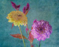 Dahlia Bouquet (05629)