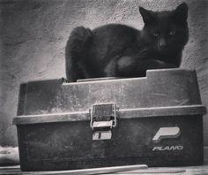 Cualquier lugar es un buen lugar para los gatos. #gato #gatoeninstagram #gatonegro #gatodeinstagram #gatito #gatos #gatobonito #miaw #catslover #cats #cat #catlove #blackcat #meow #neko #blancoynegro #byn #nocolor #blackandwhite by ro.miaumiau