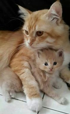 It's always such a beautiful site to see a mama cat with her kitten